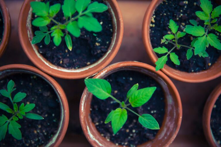 Types of Fertilizer and How to Use them